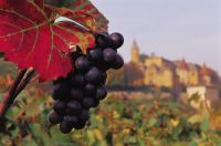 Read more: Wine Tourism